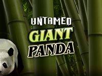 Untamed Giant Panda